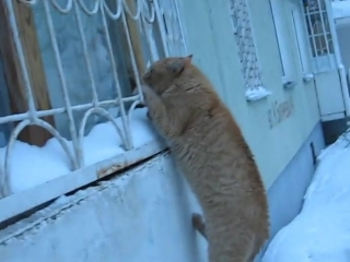Кот-романтик