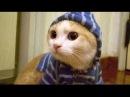 Умора! Смешные коты 2015 - новая подборка приколов про котэ! Funny cats! New