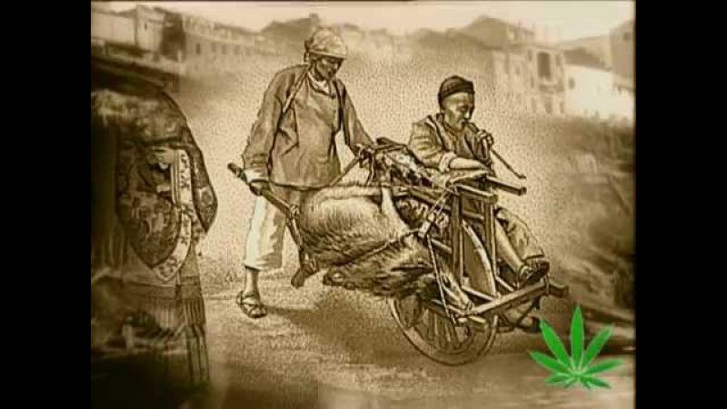 The Magic Weed - History Of Marijuana