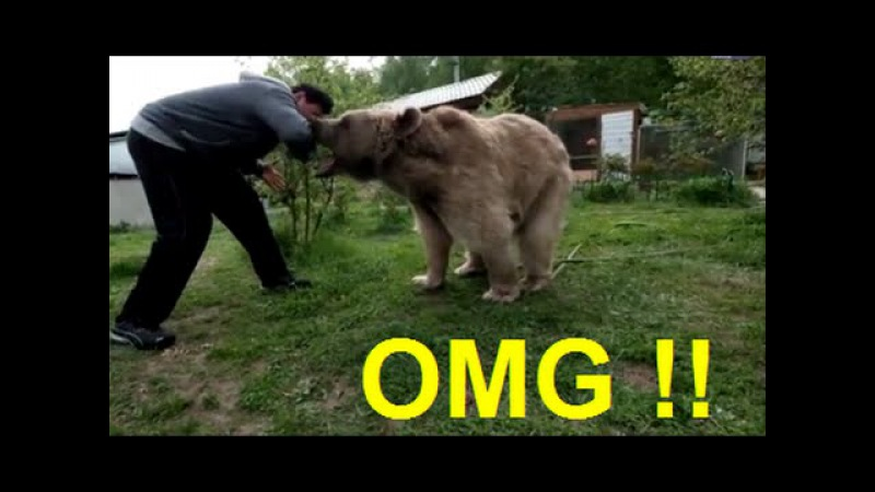 WONDERFUL ! Family allow 7ft pet bear to live with them | Bear vs man