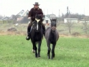 Клип на песню  о лошадях