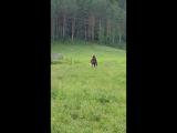 Алтай конь Мангол