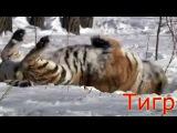 Развивающее видео для детей. Дикие животные и птицы России, Видео про животных