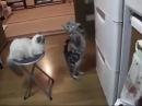 Кот-попрошайка и холодильник: Дай поесть)