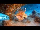 Морской Мир Самые красивые и удивительны обитатели морей и океанов 1080p