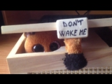 НЕ БУДИТЕ МЕНЯ ! Коробка - Не включать свет, я сплю !