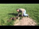 Помог детенышу альпаки