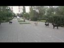 Бродячие собаки в парке 50-летия СССР