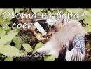 Охота на хищника ▷ Открытие охоты 2015 - на серых ворон и соек