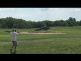 Гигантский аллигатор гуляет по полю для гольфа