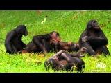 Супер видео Досмотрите это до конца! О смысле жизни по сути! Личная эволюция, на...