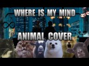 The Pixies - Where Is My Mind Animal Cover