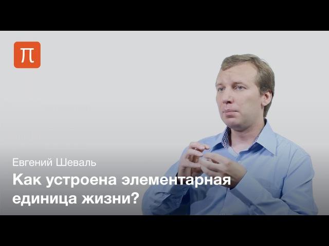 Евгений Шеваль - Клеточные органеллы tdutybq itdfkm - rktnjxyst jhufytkks