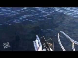 Потрясающая прогулка на яхте: тут и дельфины тебе, и киты, и тюлени!