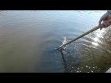 Рибалочка в с.Надросівка Володарського р-н