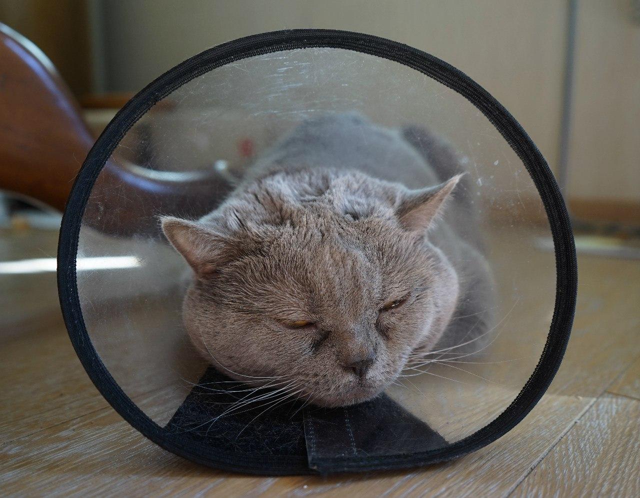 Кот кастрированный а запах мочи есть