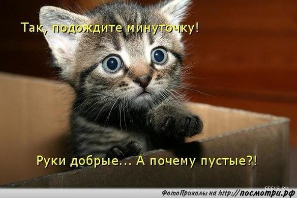 https://pp.vk.me/c633525/v633525981/23187/IKTd5Aw8ksA.jpg