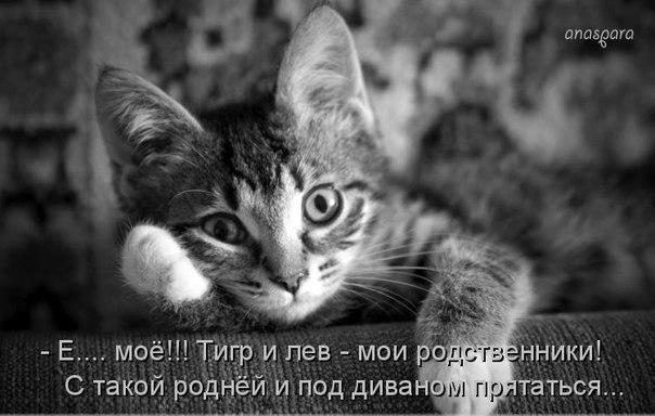 https://pp.vk.me/c633525/v633525981/2401a/h6G8dCpGz8M.jpg