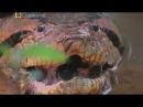 Самые опасные животные в мире - Амазония. Документальный фильм National Geographic