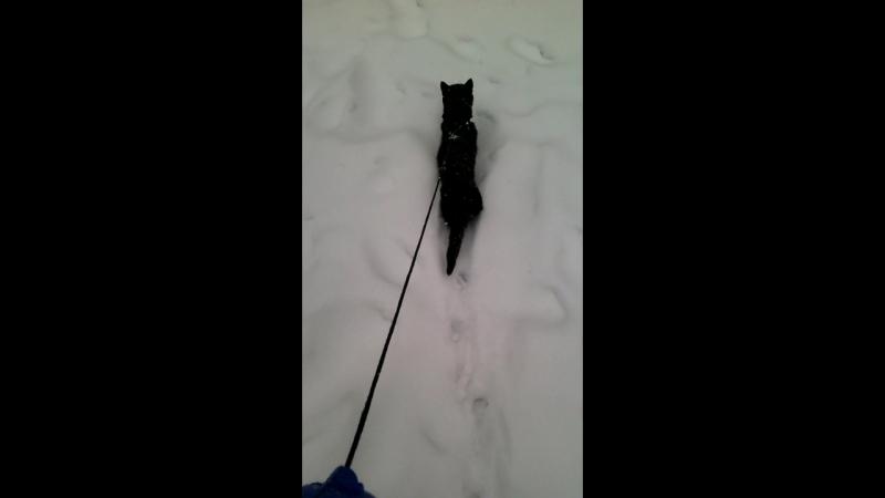 Выпал снежок , пошла на прогулку с котэ