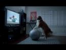 Fat Dog 720p