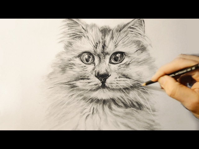 Как нарисовать кошку поэтапно для детей 9 лет