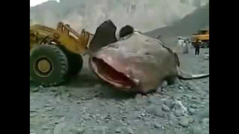 Шок самый большой Сом в мире The biggest catfish in the world 2016