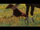 клип . Жеребёнок - Белой лошади ребёнок