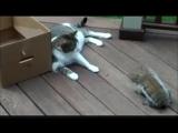 Белка ворует корм у кошки [3D Low, 240p]