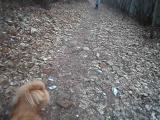 Я і Чапа гуляємо