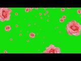Flores Caindo #2 - Flowers Falling #2 [Fundo Verde - Green Screen]