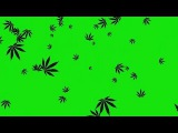 Chuva de Cannabis #1 - Rain of Cannabis #1 [Fundo Verde - Green Screen]
