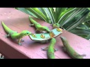 Raptor multiple mlem