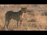 Funny Talking Animals - Walk on the Wild Side - Series 2, Episode 5, Preview - BBC One