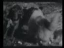 Собака против 2 волков 18 очень известное видео