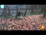 Прикол 2015   Жестокая охота на дикого кабана  Нервным не смотреть