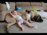 Самое смешное видео про животных. Fun with animals. # 121