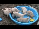 Смешные животные видео смотреть онлайн бесплатно до слез