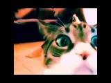 Полный ржач кот снимается пока девушка снимает себя Приколы над животными 2015г