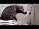Приколы 2015. Самые Смешные видео с животными