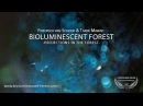 BIOLUMINESCENT FOREST – PROJECTIONS IN THE FOREST - Short Film Nominee Cosmic Cine Filmfestival 2015