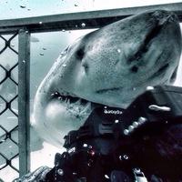 sharks_s