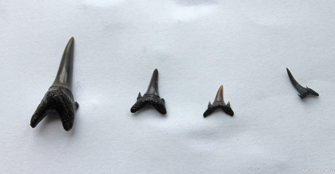 Зубы древних акул