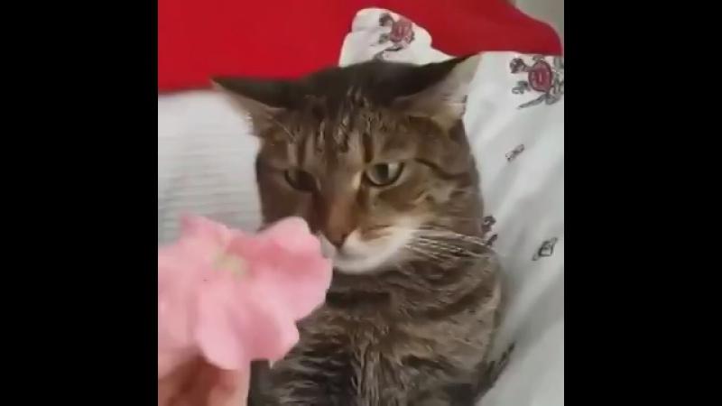 У кота удивленное лицо