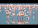 Bolivias Salar De Uyuni Chiles Wildlife Wonders in 4K Nature Relaxation™ Experience