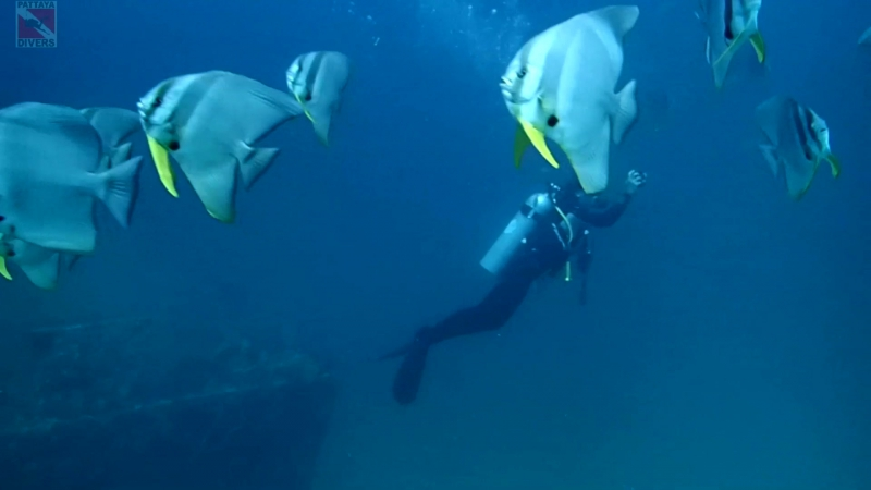 Дайвинг-тур Паттайя - Чумпхон. Праб-рэк   Diving Tour Pattaya - Chumphon. Prab Wreck