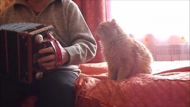 Сказочный рыжий кот любит гармонь. Антистресс и позитив