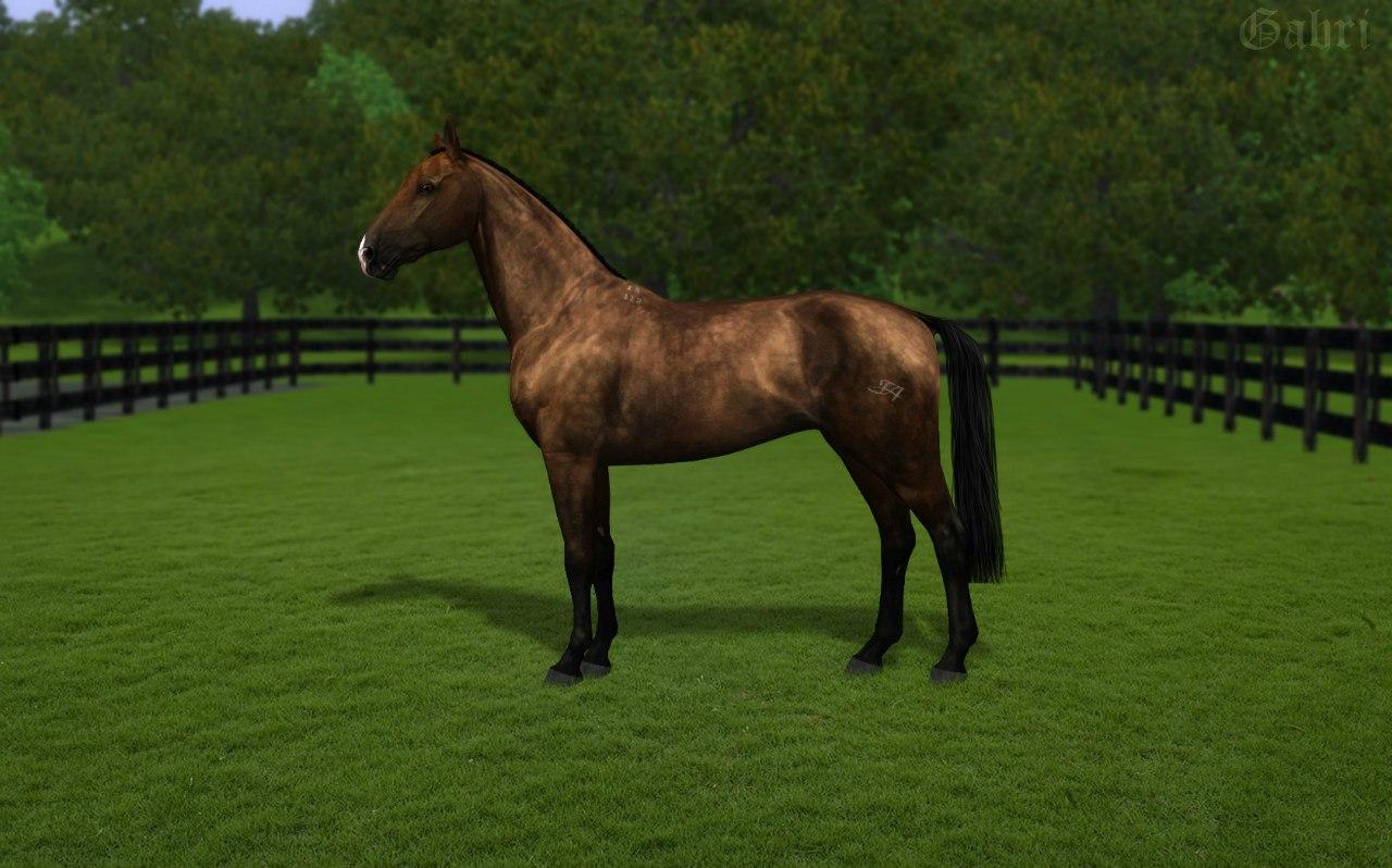 Регистрация лошадей в RHF 2 - Страница 37 HD8TMIxsqhw