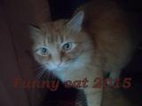 Кот ЯША ВОЗМУЩЁН а канарейки его передразнивают СМЕШНЫЕ рыжие КОТЫ и кошки Funny cats 2015