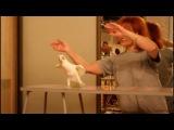 Попугай танцует